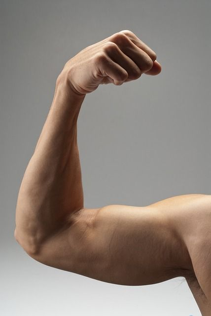 Рука с мускулатурой